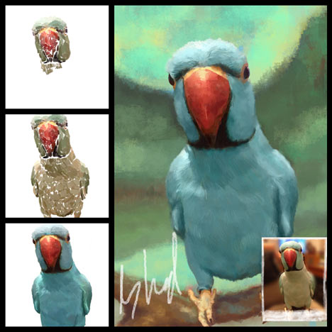 digital painted pet portraits - birds indian ring neck