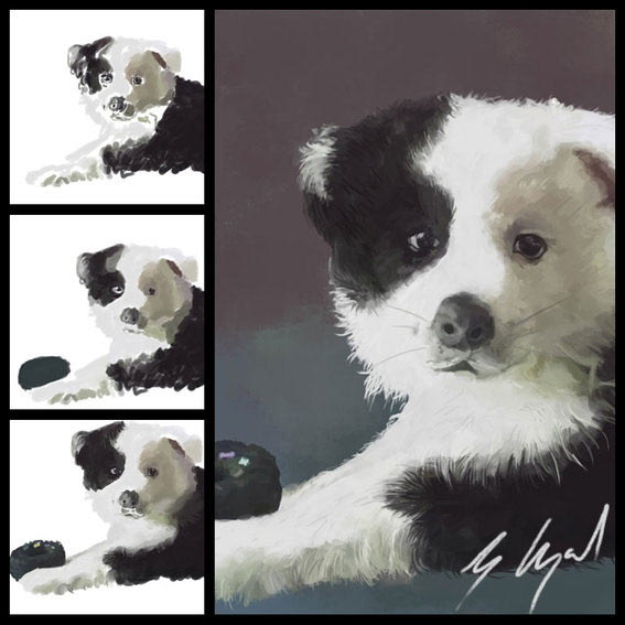 digital painted pet portraits - dogs border collie